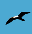 soaring seagull in blue sky seabird isolated on vector image