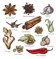 Indian Spices Herbs Icon Set vector image