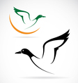 flying wild duck vector image