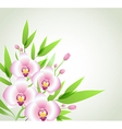 Pink orchids and green leaves vector image vector image