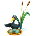 A duck at the pond beside her eggs vector image vector image
