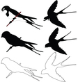 swallows collection - vector image