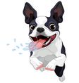 Terrier Boston vector image