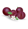 composition of several plums purple plum vector image