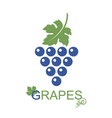grapes bunches icon vector image vector image