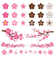 Cherry Blossoms or Sakura flowers Ornament vector image