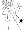 spidr web 04 vector image vector image