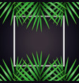 palm leaf macarthurs palm background with white vector image