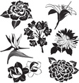 Black and White Set of Flowers vector image vector image