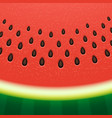 watermelon texture background vector image