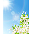 Flowering cherry on the background of blue sky vector image