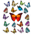 Set of different colorful butterflies vector image