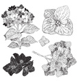 Sketch Set of Flowers vector image