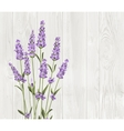 Bunch of lavender flowers on a white background vector image