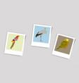 polaroid photo of stork owl parrot vector image