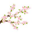 Sakura branch isolated vector image