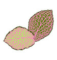decorative leaves isolated natural detailed vector image