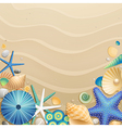 shells and starfishes vector image