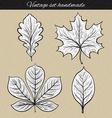 Retro set of 4 leaf sketch handmade Vintage leaves vector image