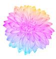 hand drawing rainbow flower vector image
