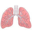 Human lung cartoon vector image