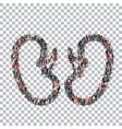 human kidneys medicine people 3d vector image