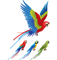 Parrot Vector Image