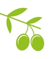 olive seeds isolated icon design vector image