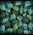 christmas fir branches vector image