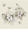 vintage botanical blossom flowers vector image