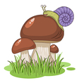 cartoon mushrooms vector image
