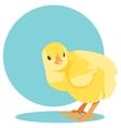 yellow newborn chick vector image
