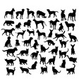 Pet Animal Dog and Cat Silhouettes vector image