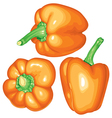 peppers orange vector image vector image