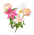 with pink lily calla and vector image