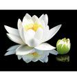 waterlily flower vector image