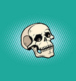 human skull head skeleton vector image