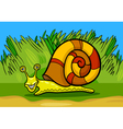 snail mollusk cartoon vector image