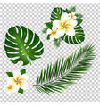 palm and monstera tree leaf vector image vector image
