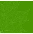 Leaf skeleton vector image vector image