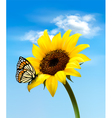 sunflower with butterfly vector image