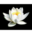 water lily flower vector image