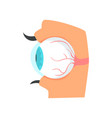 eyeball anatomy of human eye cartoon vector image