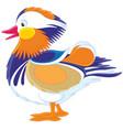 motley mandarin duck vector image