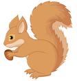 Squirrel cartoon holding nut vector image