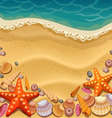 shells on the beach vector image