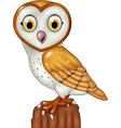 Cartoon barn owl posing isolated vector image