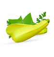 vegetable marrow courgette or zucchini isolated on vector image