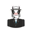 farm call center cow with headset bull feedback vector image