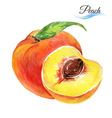 Watercolor peach vector image